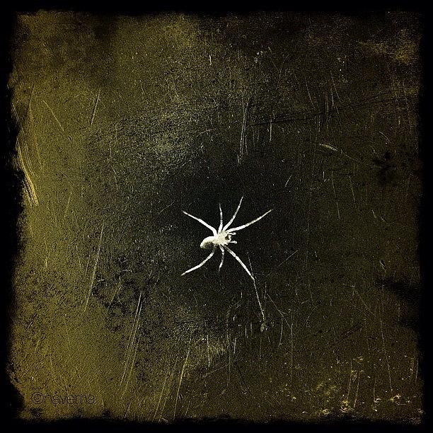 Spider Photograph - Arachnid by Natasha Marco