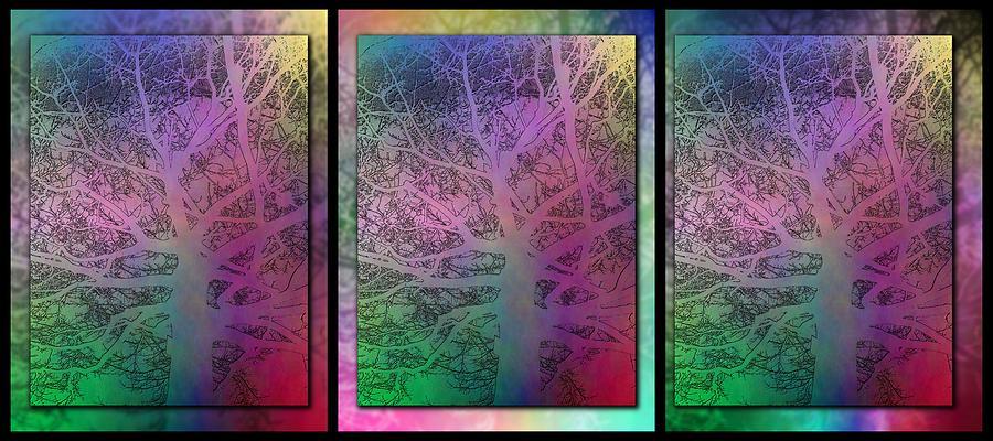 Tree Digital Art - Arboreal Mist Trilogy by Tim Allen