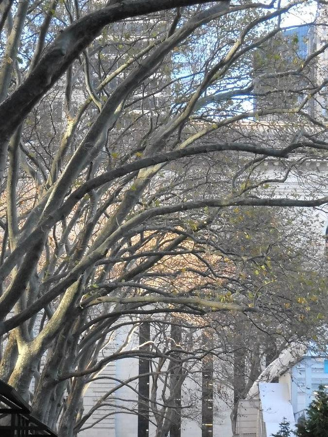 Trees Photograph - Arched Trees by Kimberly Perry