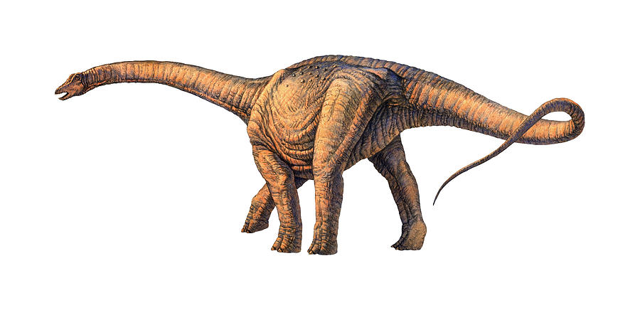 Argentinosaurus Photograph - Argentinosaurus Dinosaur by Joe Tucciarone