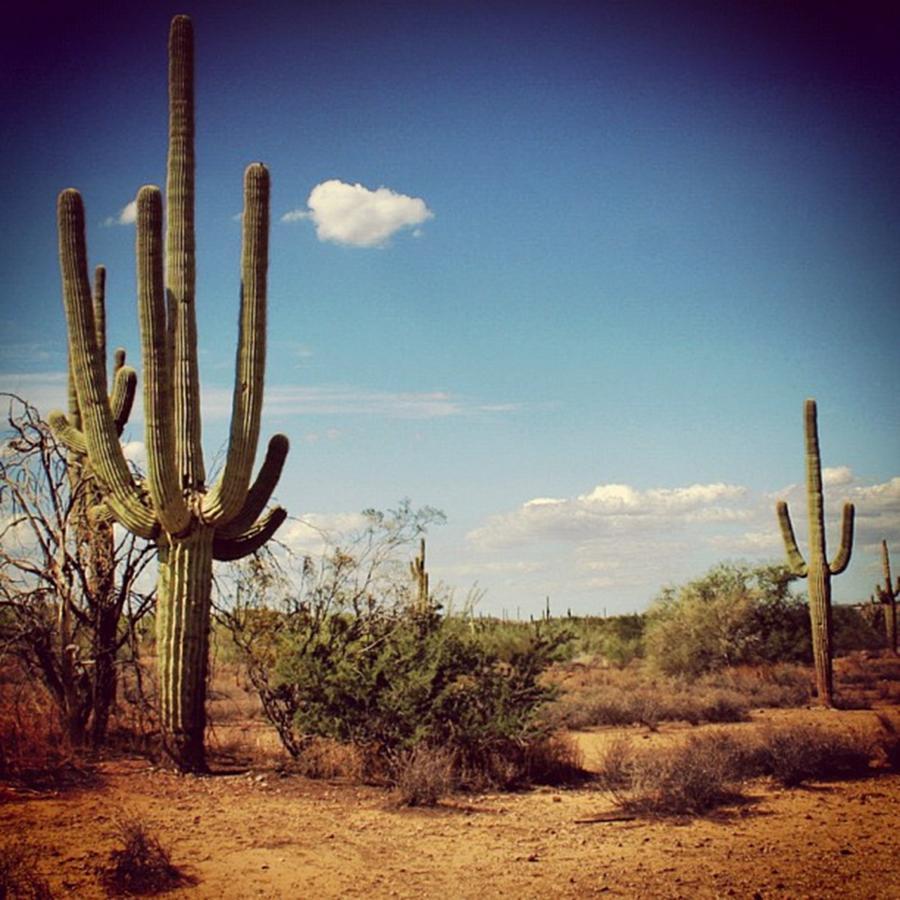 Desert Photograph - Arizona by Luisa Azzolini