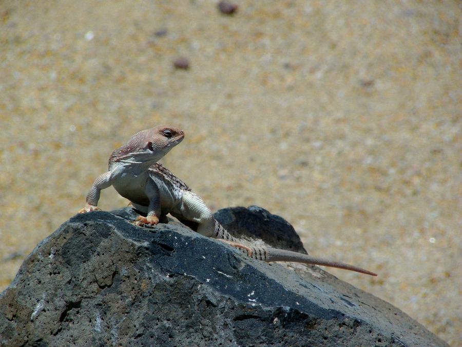 Arizona Photograph - Arizona Wildlife by Wayne Toutaint