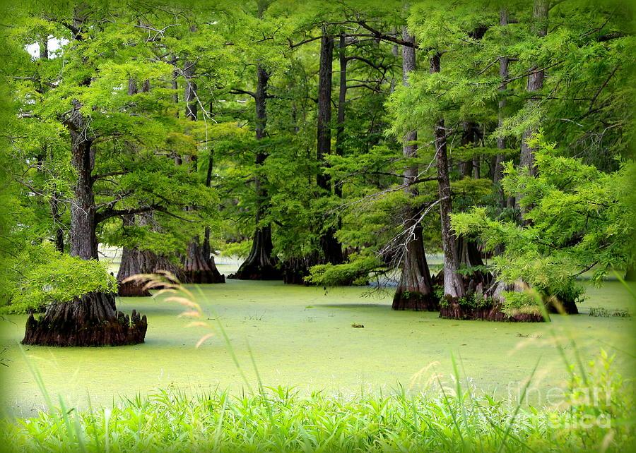 Lake Photograph - Arkansas Lake With Cypresses by Carol Groenen