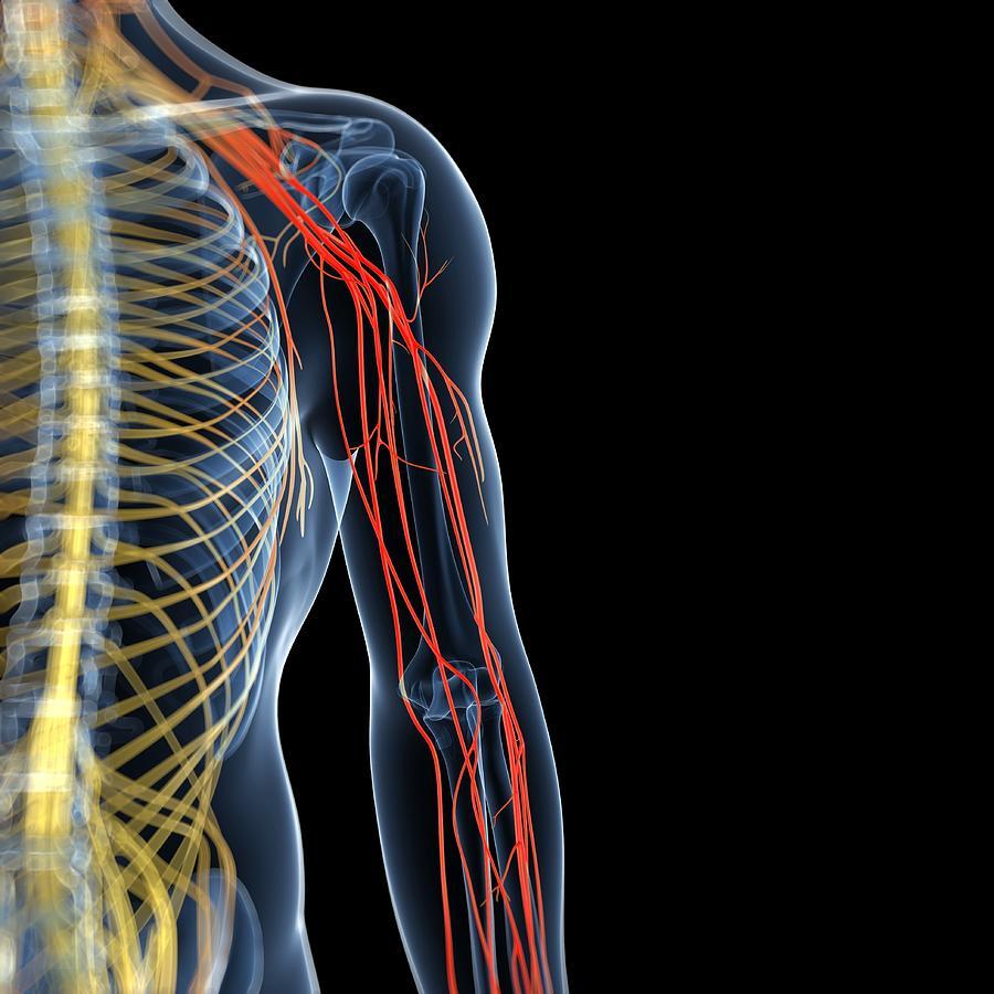 Arm Pain, Conceptual Artwork Digital Art by Sciepro