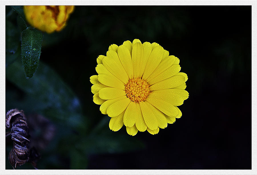 Flower Photograph - Artwork Of The Nature For A Moment by Axko Color de paraiso