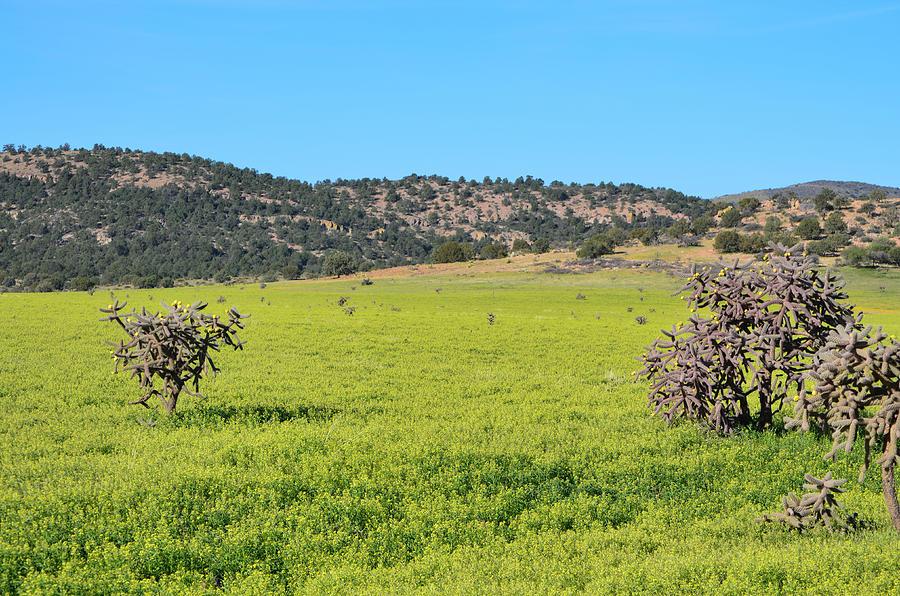 San Carlos Photograph - Ash Creek Valley II by Donna Greene