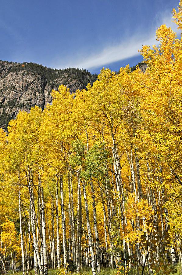 Fall Photograph - Aspen 7 by Marty Koch