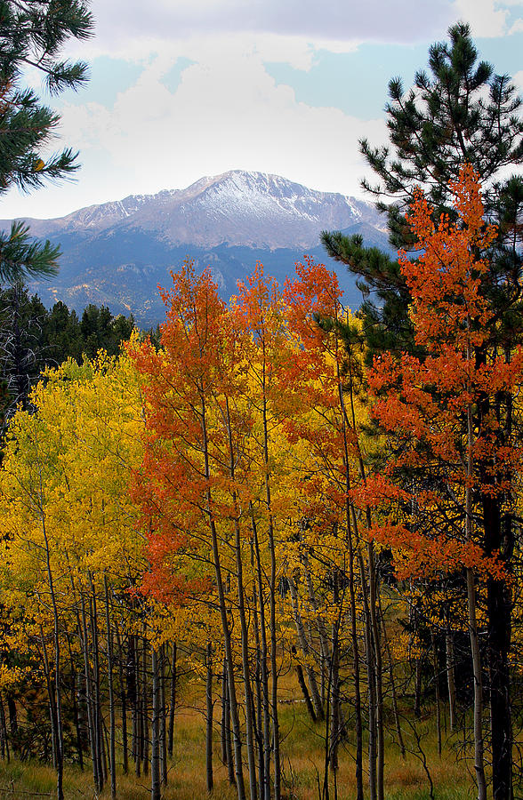 Colorado Mountains Photograph - Aspen Grove And Pikes Peak by Kimberlee Fiedler