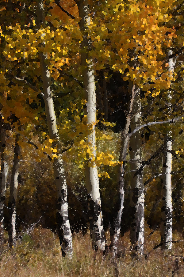 Aspen Photograph - Aspen Palate Knife by Judy Deist