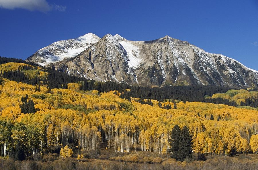 Attraction Photograph - Aspen Trees In Autumn, Rocky Mountains by David Ponton