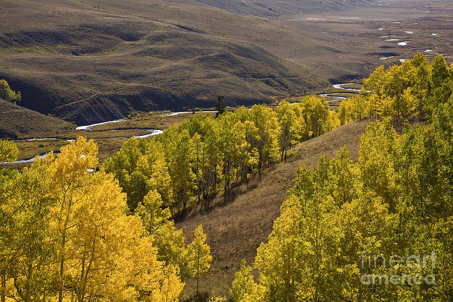 Aspen Trees Photograph - Aspen Valley by Timothy Johnson