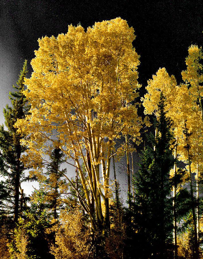 Aspens Photograph - Aspens 2 by Jim Painter