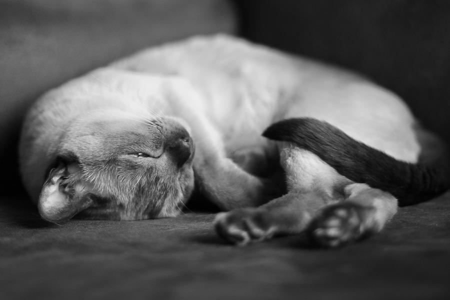 Cat Photograph - Astir by Robin Konarz