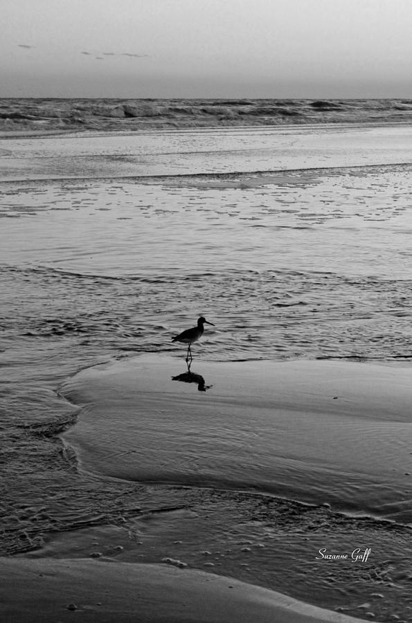 Bird Photograph - At Twilight In Black And White by Suzanne Gaff