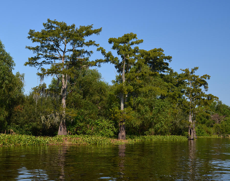 Bald Cypress Photograph - Atchafalaya Basin 41 by Maggy Marsh