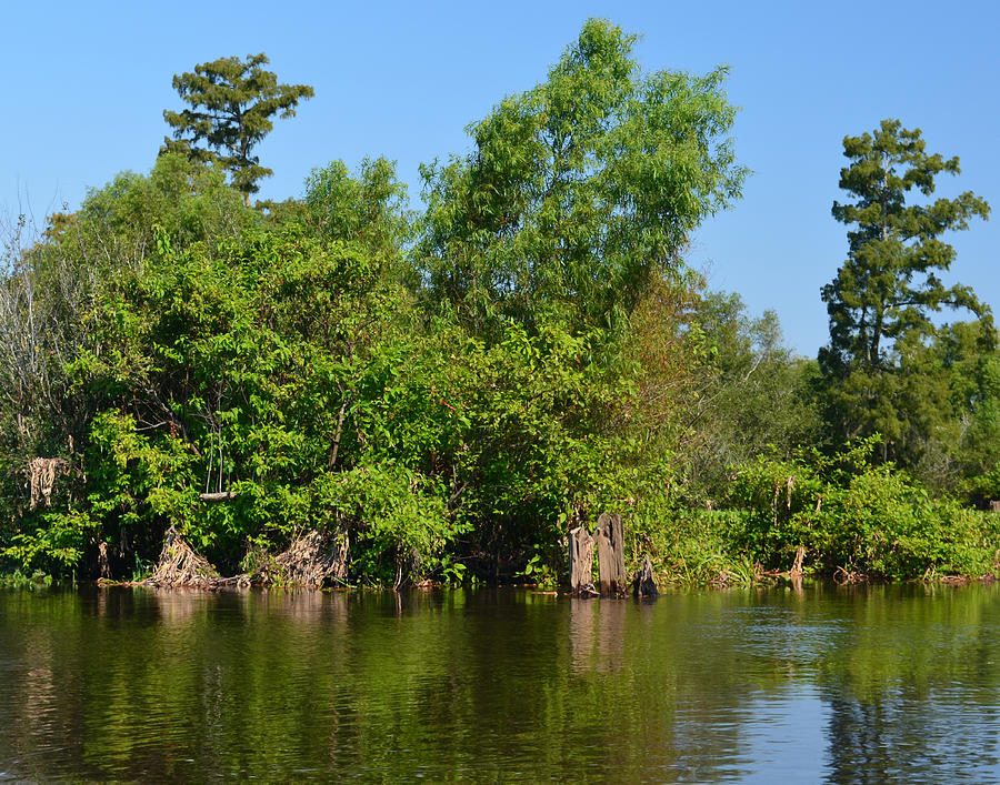 Bald Cypress Photograph - Atchafalaya Basin 46 by Maggy Marsh