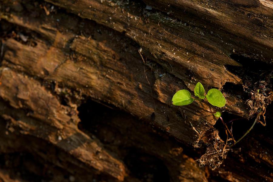 Nature Photograph - Atres 9 by Karol Livote