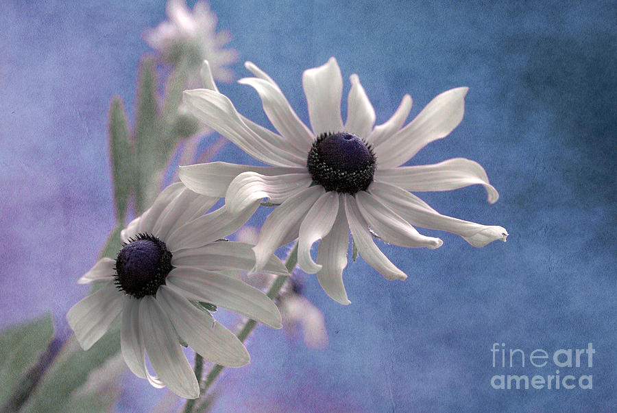 Floral Photograph - Attachement - S09at01 by Variance Collections