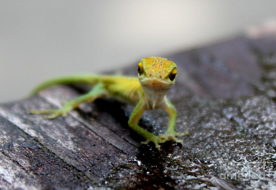Green Anole Photograph - Attitudinous Anole by Theresa Willingham