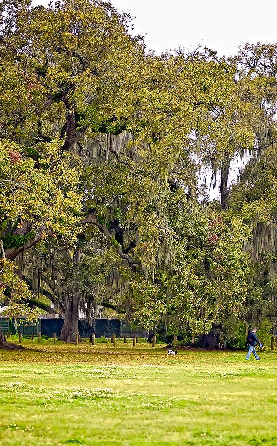 New Orleans Photograph - Audubon Park 2 by Steve Harrington