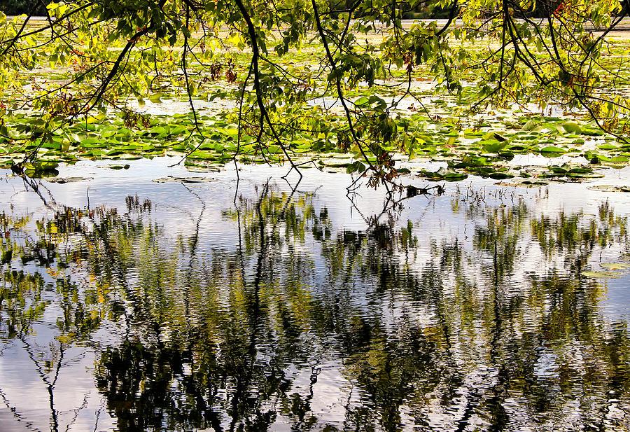 August Photograph - August Reflections by Rachel Cohen