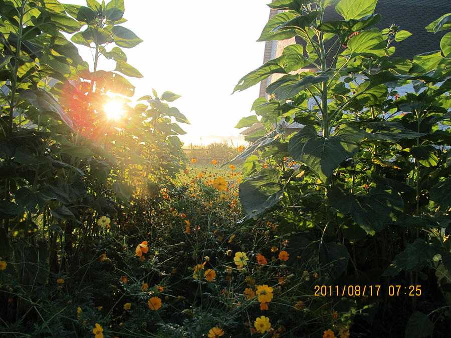 Sunrise Photograph - August Sunrise In The Garden by Tina M Wenger