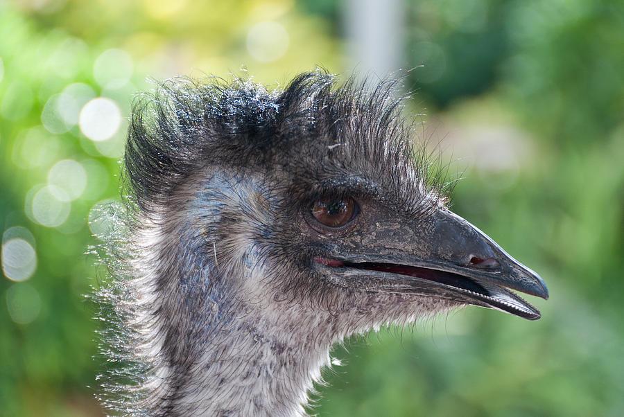 Australian Bird Photograph by Linda Pulvermacher