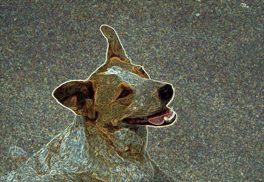 Heeler Photograph - Australian Cattle Dog Mix by One Rude Dawg Orcutt