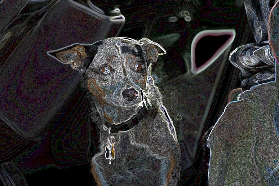 Australian Cattle Dog Photograph - Australian Cattle Dog Sheltie Mix by One Rude Dawg Orcutt