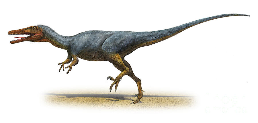 Horizontal Digital Art - Austroraptor Cabazai, A Prehistoric Era by Sergey Krasovskiy