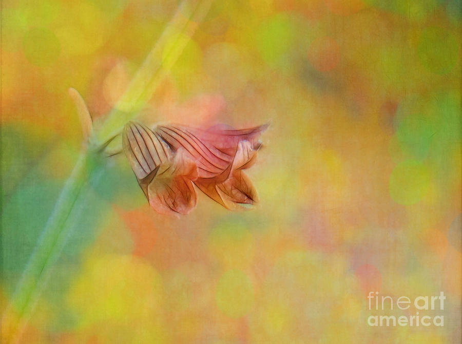 Flowers Photograph - Autumn . . . Gently by Judi Bagwell