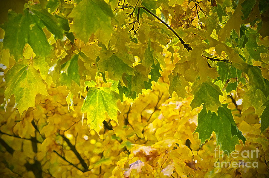 Autumn Photograph - Autumn - Mellow Time by Gwyn Newcombe