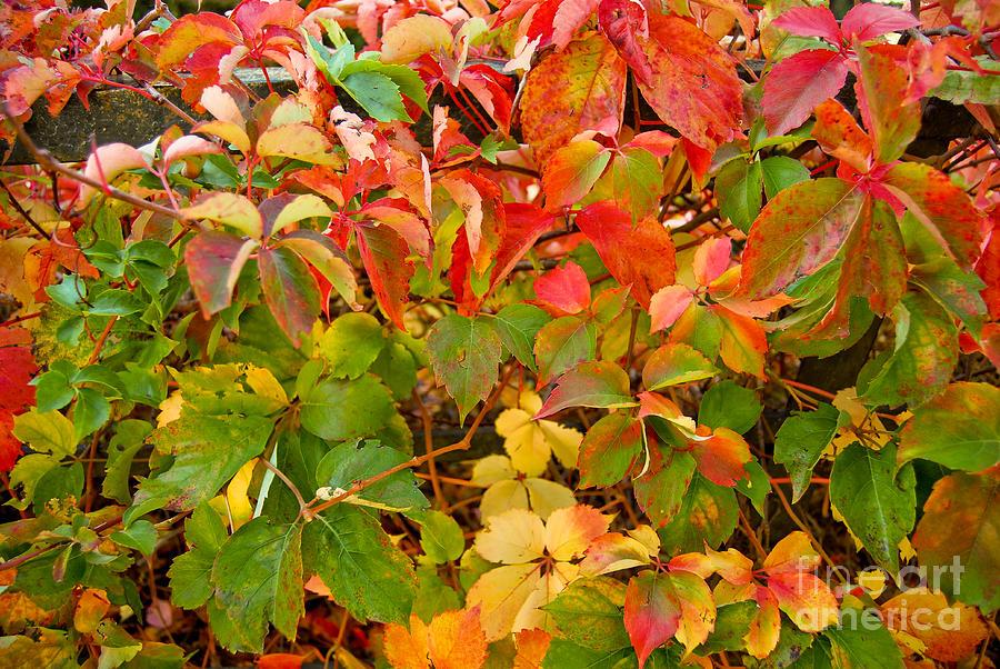 Autumn Photograph - Autumn 4 by Elena Mussi