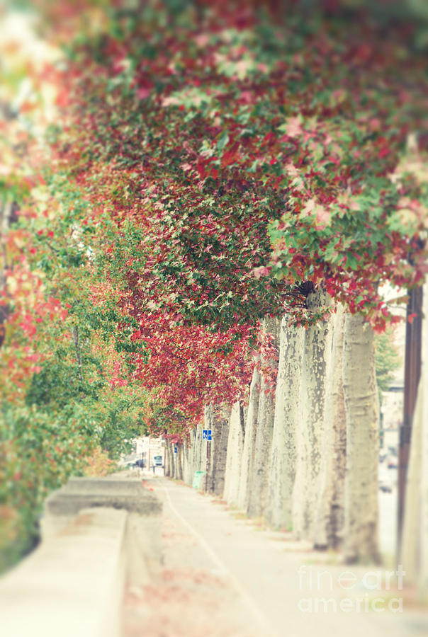 Orange Photograph - Autumn And Fall by Ivy Ho