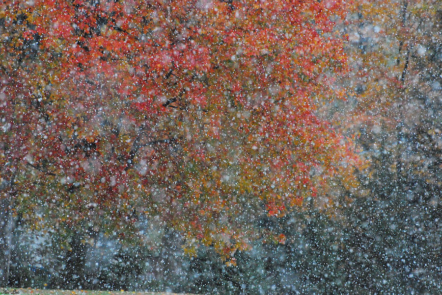 Autumn Photograph - Autumn And Winter by Kimberly Little