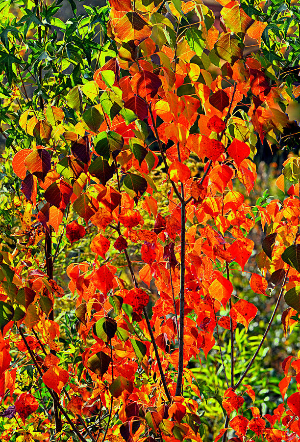 Fall Photograph - Autumn Angels..... by Tanya Tanski