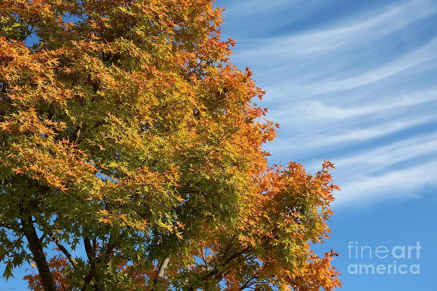 Autumn Photograph - Autumn Anticipation by Carol Groenen