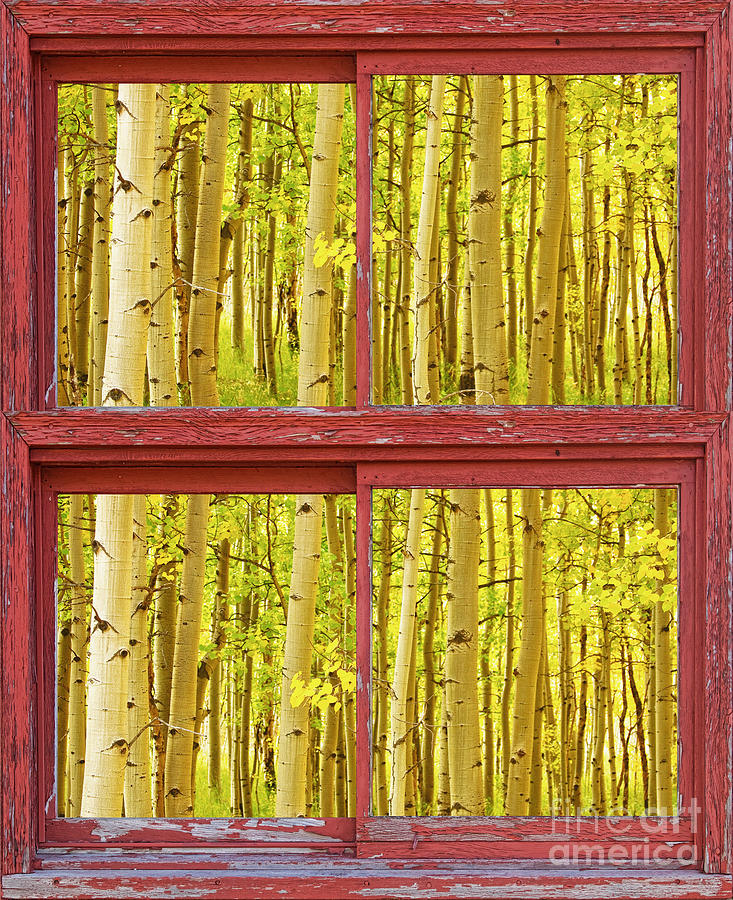 Picture Photograph - Autumn Aspen Trees Red Rustic Picture Window Frame Photos Fine A by James BO  Insogna