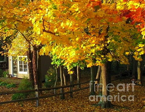 Autumn Photograph - Autumn At Bayberry Cottage  by Nancy Patterson