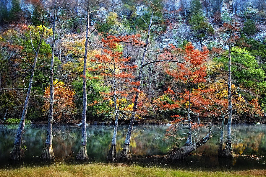Trees Photograph - Autumn At Beavers Bend by Tamyra Ayles