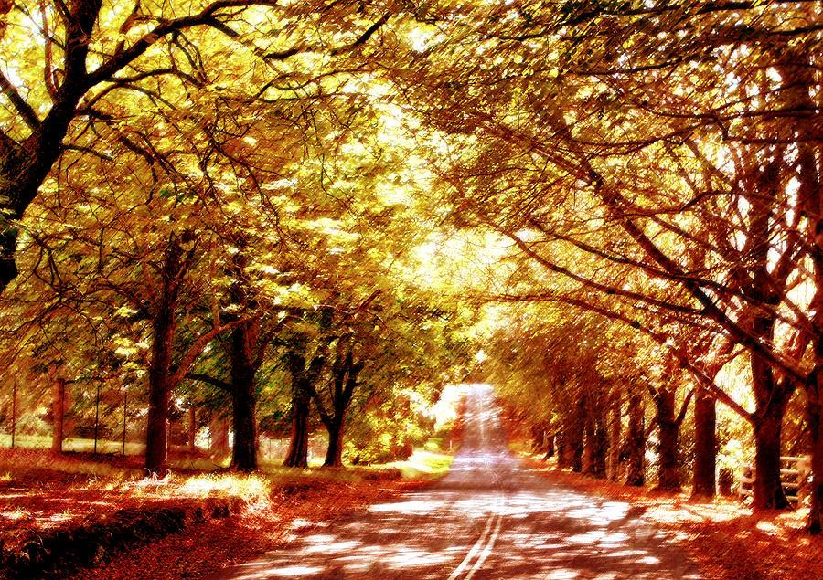 Autumn Photograph - Autumn Avenue by Linde Townsend