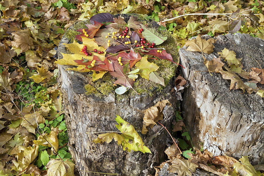 Leaves Photograph - Autumn Berries And Leaves  by Aleksandr Volkov