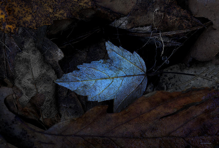 Ron Jones Photograph - Autumn Blue by Ron Jones