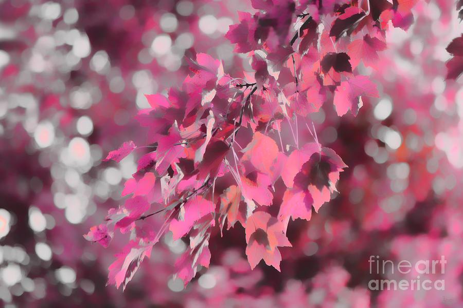 Autumn Photograph - Autumn Blush by Jeff Breiman