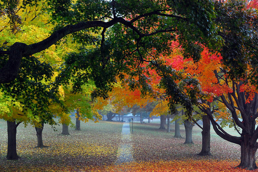 Landscapes Photograph - Autumn Canopy by Lisa Phillips