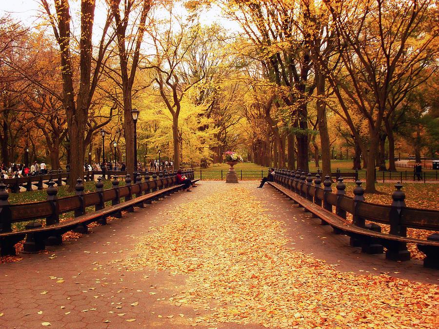 Autumn Photograph - Autumn - Central Park - New York City by Vivienne Gucwa