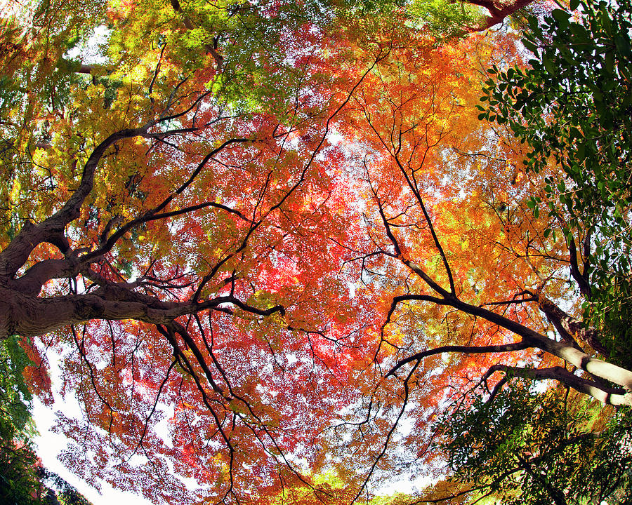 Horizontal Photograph - Autumn Color by Shuya Seno Photography