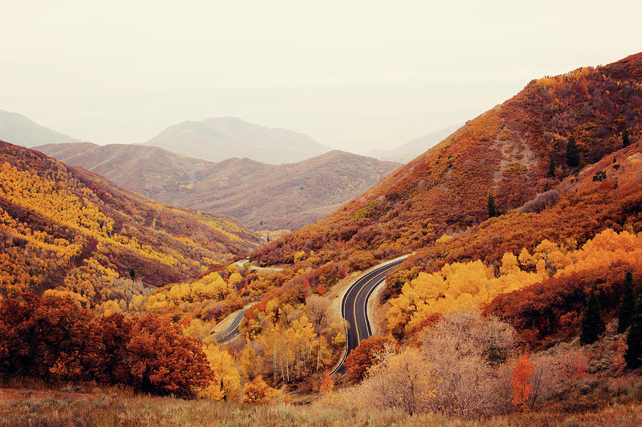 Horizontal Photograph - Autumn Colored Trees Along Mountain Road by Www.julia-wade.com