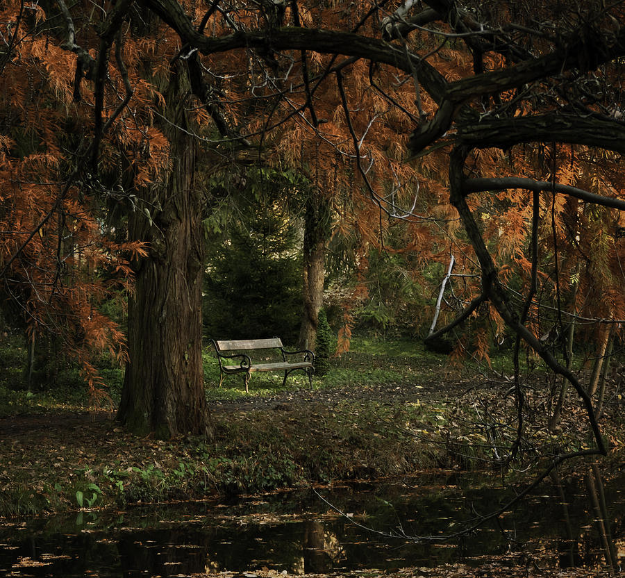 Autumn Photograph - Autumn Colors by Akos Kozari