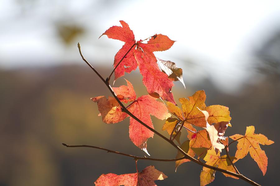 Autumn Colors-arkansas Photograph - Autumn Colors-arkansas by Douglas Barnard